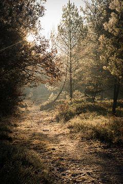 Le soleil à travers les arbres sur Ellis Peeters
