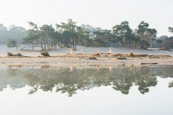 Reflectie - Loonse en Drunense Duinen