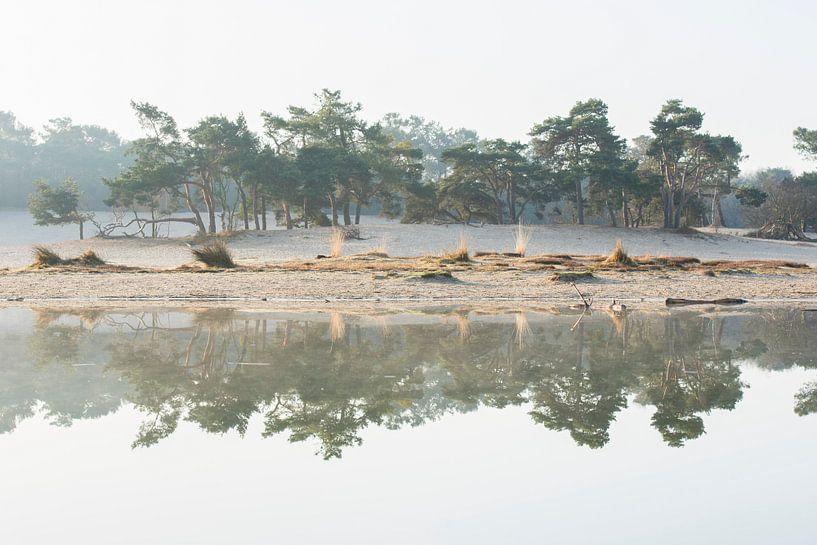 Reflectie - Loonse en Drunense Duinen van Laura Vink