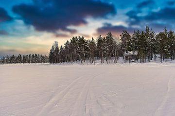 Pasvik National Park von Kai Müller