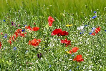 Rote Mohnblumen / Rote Mohnblumen von Henk de Boer