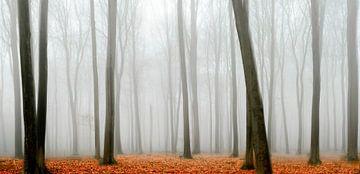 Vue dans une forêt de hêtres pendant un matin brumeux sur Sjoerd van der Wal