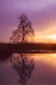 Strabrechtse Heide 166 van Deshamer