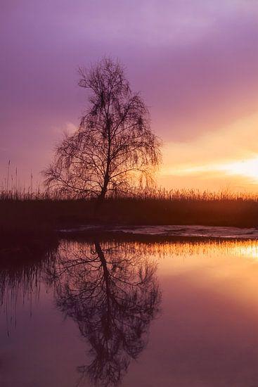 Strabrechtse Heide 166