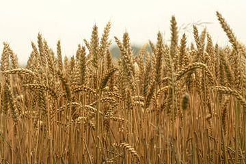 Getreidefeld von Niek Traas