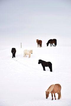 Soziale Distanzierung in Island von Elisa Hanssen