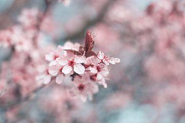 Vintage Blüten von Kristof Ven