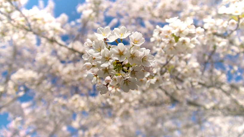 Lente bloesem 2 van Marloes van Pareren