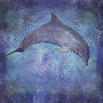 Dolfijn sur Sigrid Klop