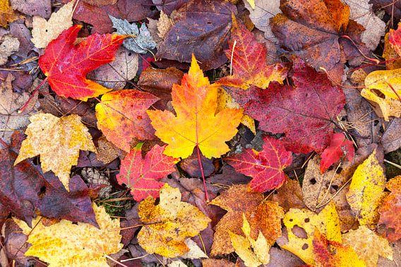 Herfstkleuren I van Evert Jan Luchies