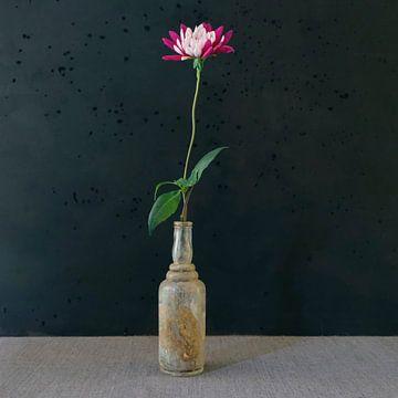 Dahlia in oud flesje van Marion Kraus