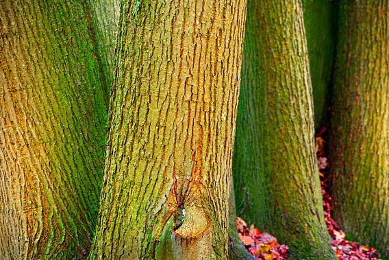 boomstammen van Martin Rijpstra