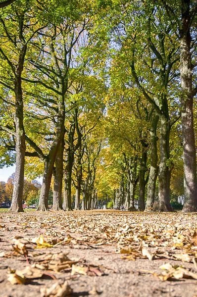 Herfst in het park van Mark Bolijn