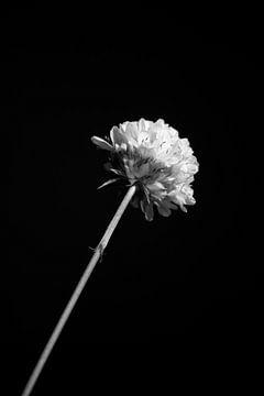 Blume in der Mittagssonne von Eveline Hellingman
