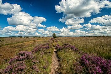 Heide en Wolken