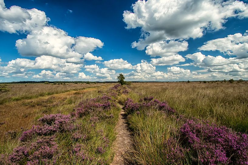 Heide en Wolken van Martin Smit