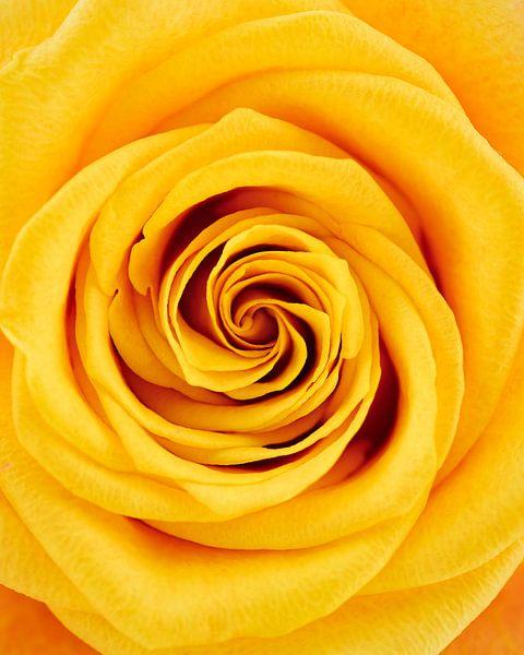 Close-up gele roos van Lorena Cirstea