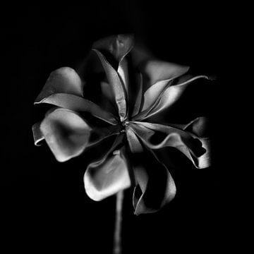 Die Essenz der Kunstblumen von Rene  den Engelsman