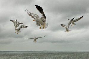 Meeuwen boven de Waddenzee van
