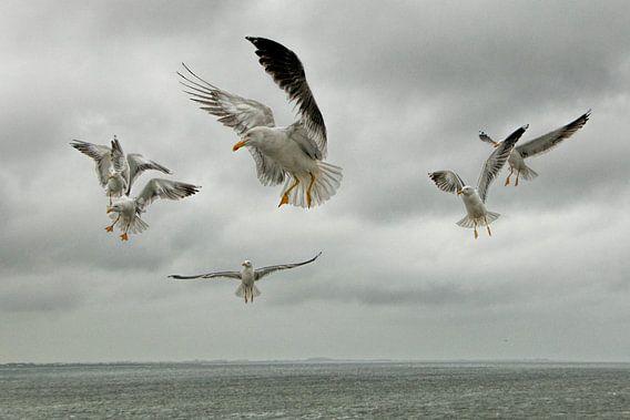 Meeuwen boven de Waddenzee van Hilde van den Berg