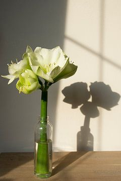 Witte lelies in fles met schaduw von Marion Moerland