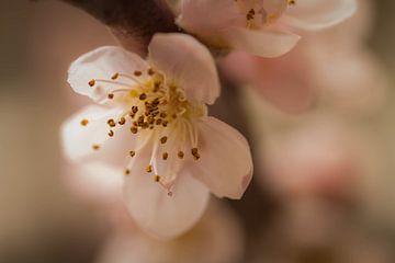 Schöne Blüte von SRF