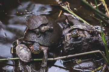 Schildpaddenfamilie van Ronne Vinkx