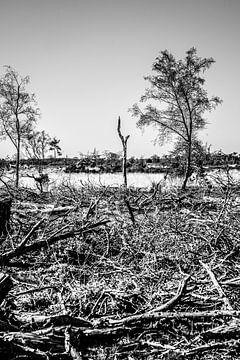 Naturgewalt: Ein vollständig zerstörter Wald in der Provinz Noord-Brabant von @Pixelsenses