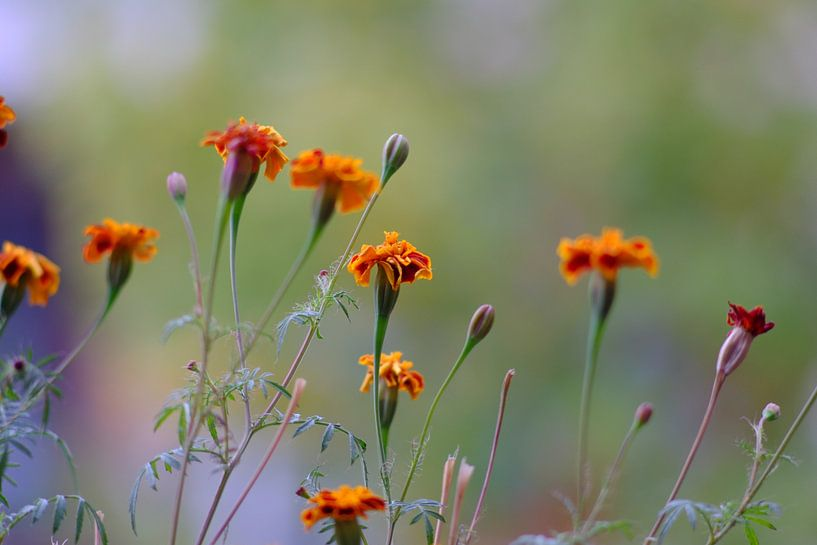 Bloemen van Erol Cagdas