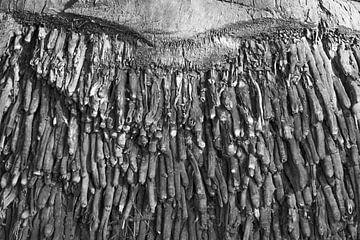 Abstract en zwart-wit van Susan van der Riet