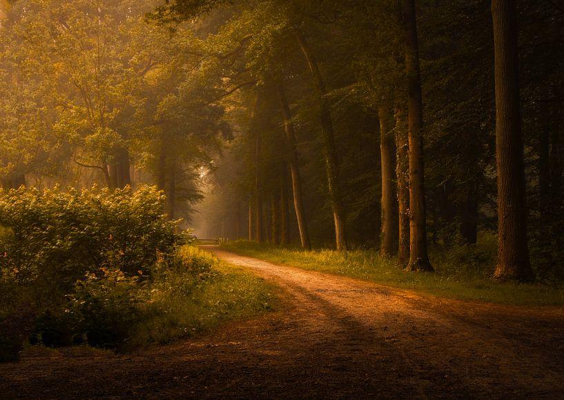 Morning Glow van Jos Erkamp