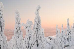 Iso Syöte - Finland - Lapland van
