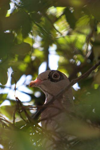 duif in een boom