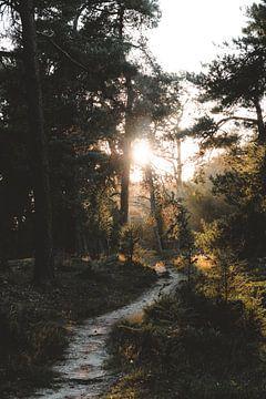 Into the Woods van Michelle Rook