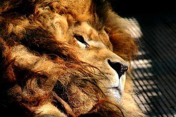 lion von ahmed bidani