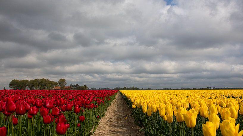 Tulpen velden in Rood en Geel van Bram van Broekhoven