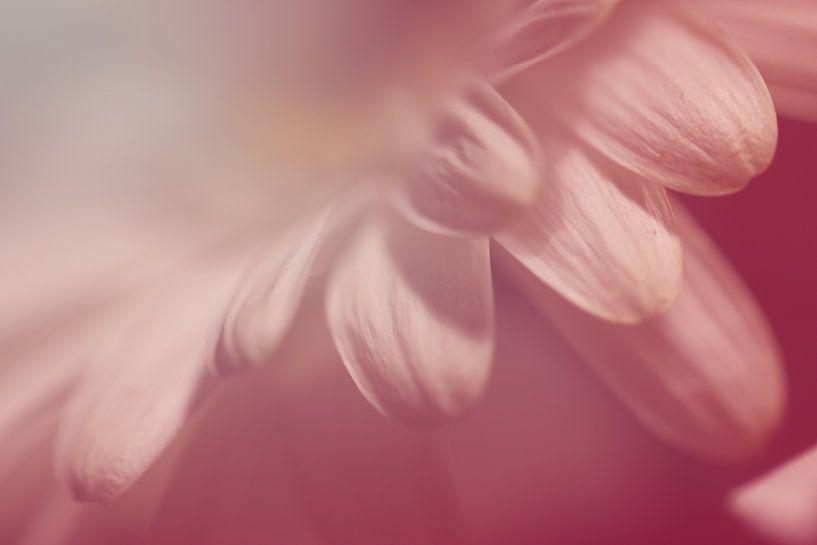 Zarte Blütenblätter van Rosi Lorz