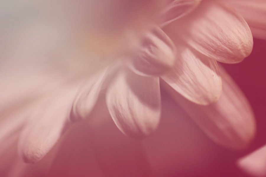 Zarte Blütenblätter