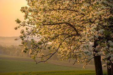 Blühender Baum von Peter Felberbauer