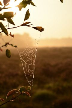 Spinnenweb in ochtendgloren van