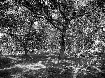 Schaduw onder bomen
