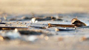 Schelpen op het strand van Carla van Zomeren