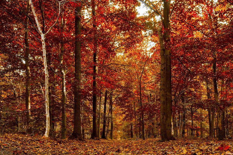 50 tinten rood .......... van Fotografie Jeronimo