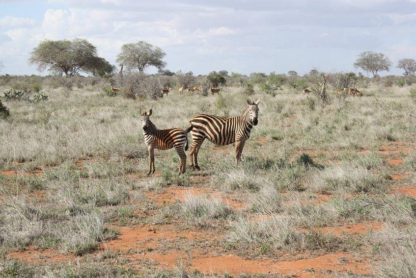 Zebra koppel van Gilian Fijen