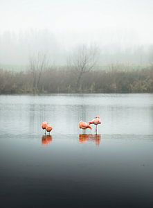 Flamingo's, slapend (staande modus)