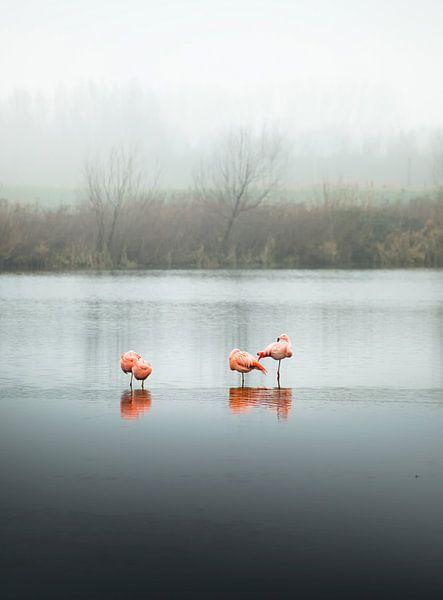 Flamingos, Schlafende (Hochformat) von Claire Droppert
