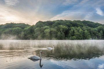 Zwanen op de Cranenweyer tijdens een mistige zonsopkomst van John van de Gazelle