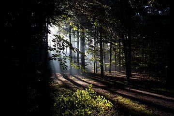 Ochtend licht in het bos van Prints by Eef