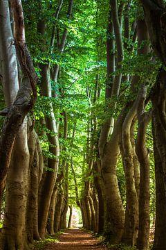 Bäume Pfad von Yvonne van Leeuwen