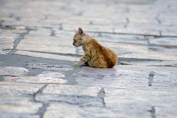 Kitten in Skopje van Natasja Claessens